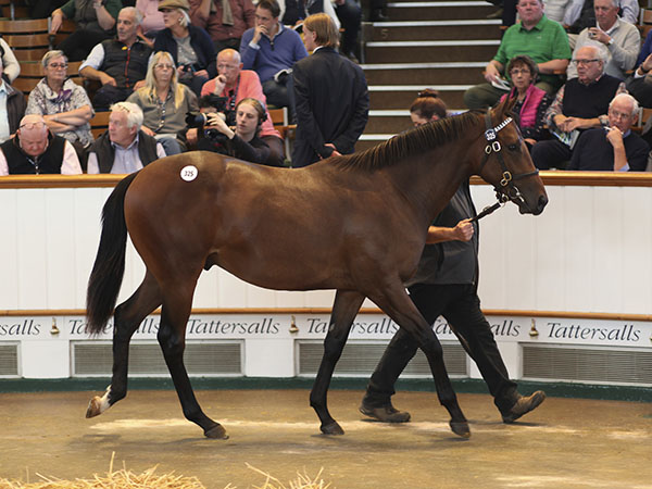 Lot 325: Dubawi (IRE) / Dar Re Mi (GB)