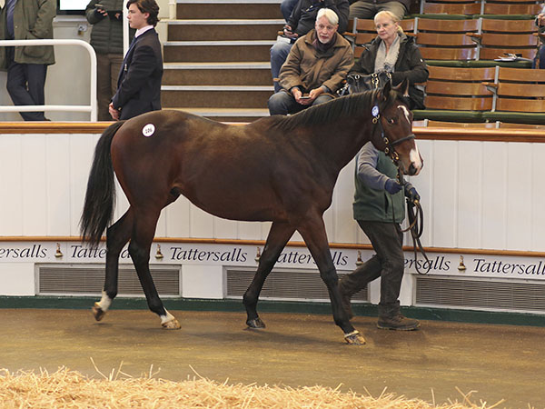Lot 106: Oasis Dream (GB) / Clarentine (GB)