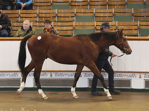 Lot 96: Gleneagles (IRE) / Bridal Dance (IRE)