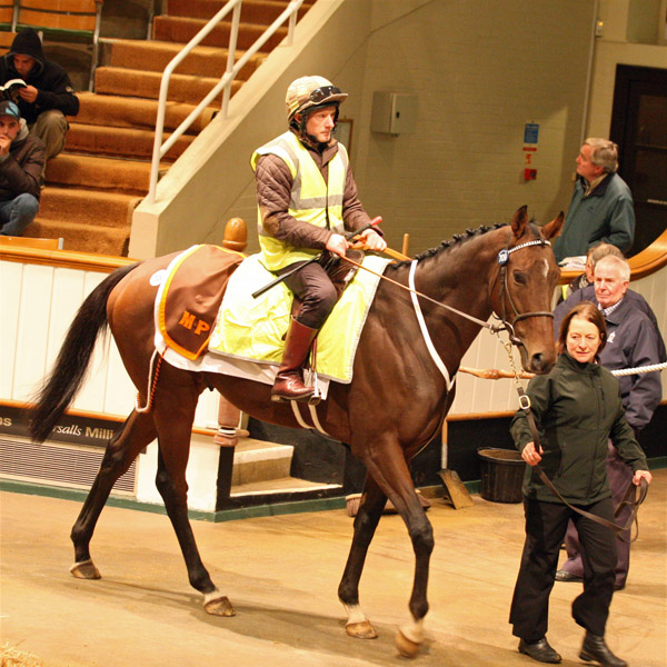 Motivado Selling at the Tattersalls Autumn Horses in Training Sale