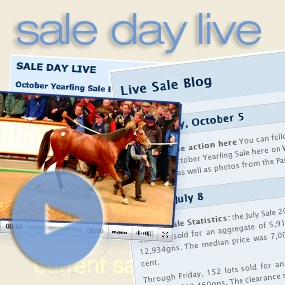 Launch Sale Day Live