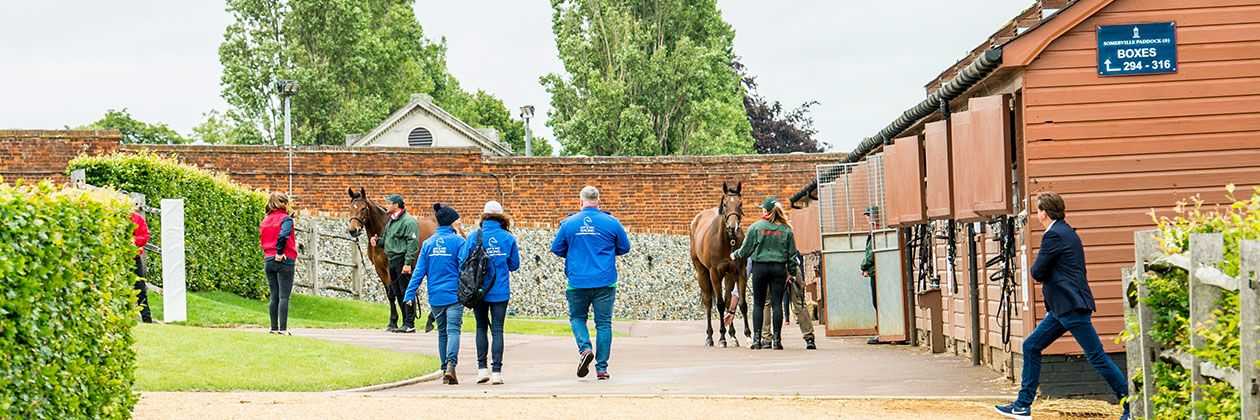 Guineas Horses in Training Sale