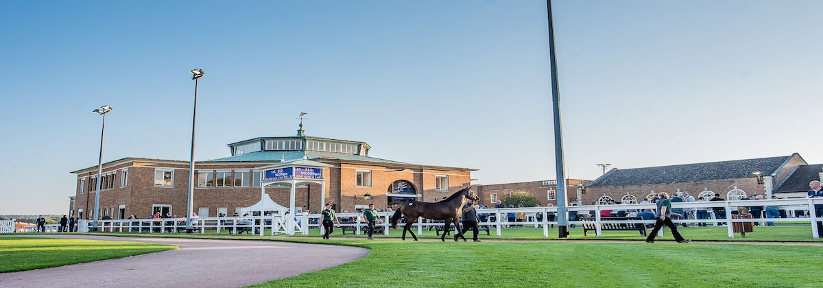 Ascot Yearling Sale, Newmarket