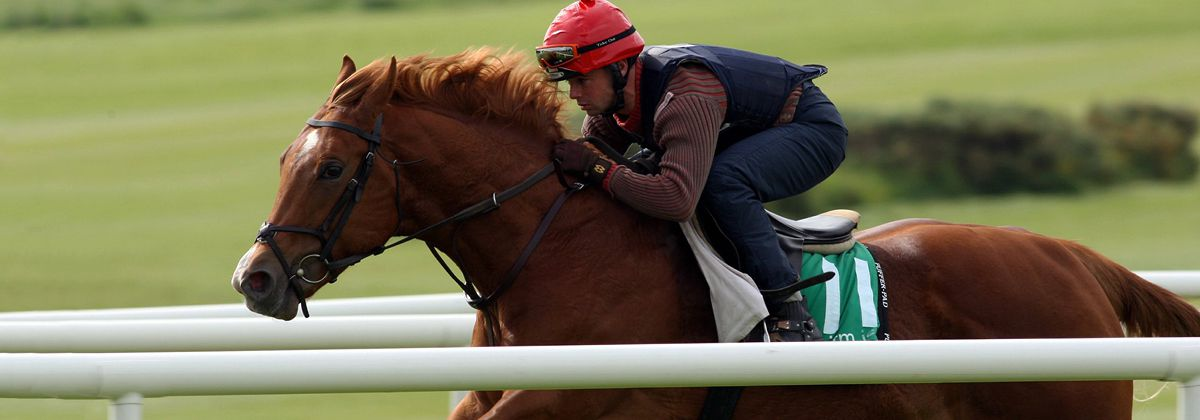 Tattersalls Ireland Goresbridge Breeze Up