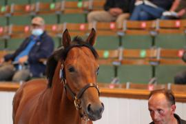 Lot  6 T G B0422 Tattersalls