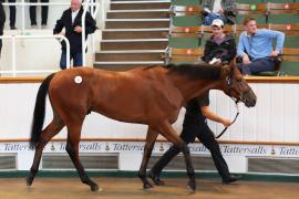 Lot  6 T G B0488 Tattersalls