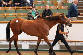 Lot  6 T G B0499 Tattersalls