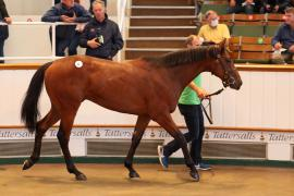 Lot  21 T G B0592 Tattersalls