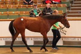 Lot  21 T G B0626 Tattersalls