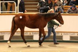 Lot  1019 T D F3887 Tattersalls