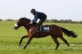 Lot  104 T G B0215 Tattersalls