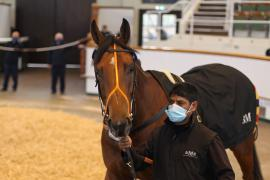 Lot  144 H I T0411 Tattersalls