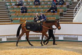 Lot  144 H I T0425 Tattersalls