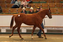 Lot  147 T D Y919 Tattersalls