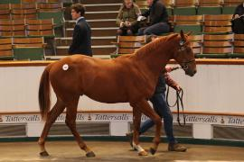 Lot  147 T D Y931 Tattersalls