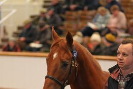 Lot  147 T D Y96 Tattersalls