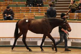 Lot  149 T D Y987 Tattersalls