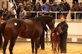 Lot  149 T F S918 Tattersalls