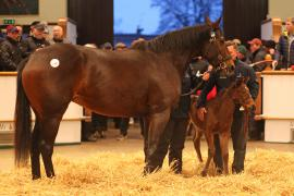 Lot  149 T F S965 Tattersalls