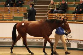 Lot  154 T D Y154 Tattersalls