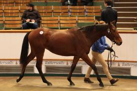 Lot  154 T D Y169 Tattersalls