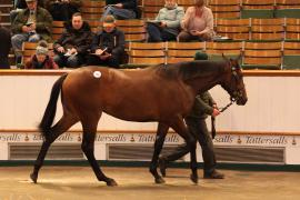 Lot  159 T D Y1137 Tattersalls