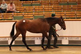 Lot  159 T D Y1141 Tattersalls