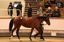 Lot  165 T D Y1158 Tattersalls