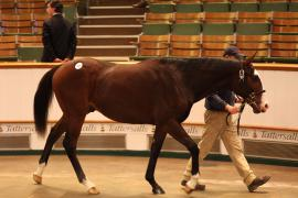 Lot  167 T D Y1226 Tattersalls