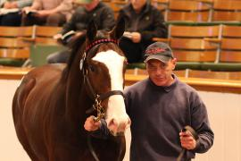 Lot  167 T D Y126 Tattersalls