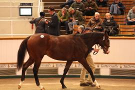 Lot  167 T D Y129 Tattersalls