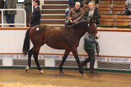Lot  106 T D Y864 Tattersalls