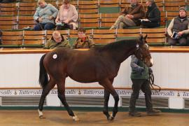 Lot  106 T D Y872 Tattersalls