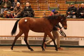 Lot  171 T D Y1334 Tattersalls