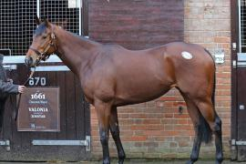Lot  1793 C T D M0671 Tattersalls