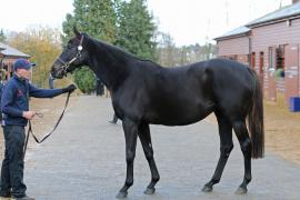 Lot  1821 T D M1287 Tattersalls