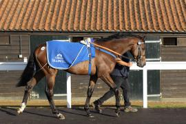 Lot  206 H I T0776 Tattersalls