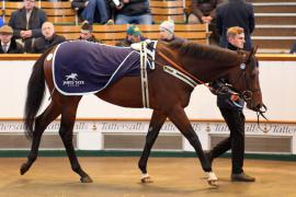Lot  215 H I T414 Tattersalls