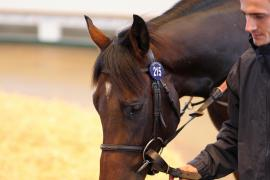 Lot  215 H I T473 Tattersalls