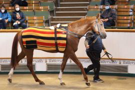 Lot  223 H I T0813 Tattersalls
