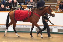 Lot  225 H I T511 Tattersalls