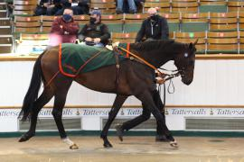 Lot  230 H I T0955 Tattersalls
