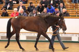 Lot  236 H I T745 Tattersalls