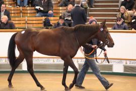 Lot  236 H I T761 Tattersalls