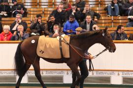 Lot  237 H I T934 Tattersalls