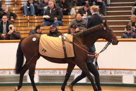 Lot  237 H I T939 Tattersalls