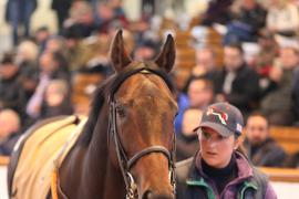 Lot  237 H I T956 Tattersalls