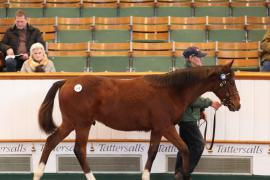 Lot  240 T D F0037 Tattersalls