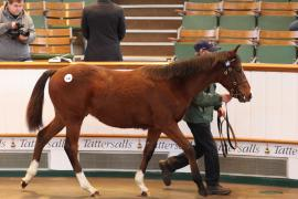 Lot  240 T D F0045 Tattersalls