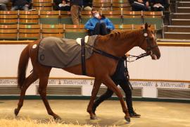 Lot  254 H I T1152 Tattersalls